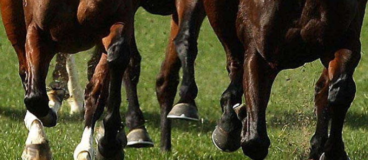 Bookmakers 'made at least £75m' on Grand National Saturday